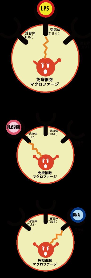 nakuro